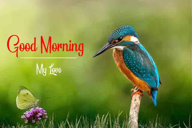 Love Good Morning Wallpaper for Bird