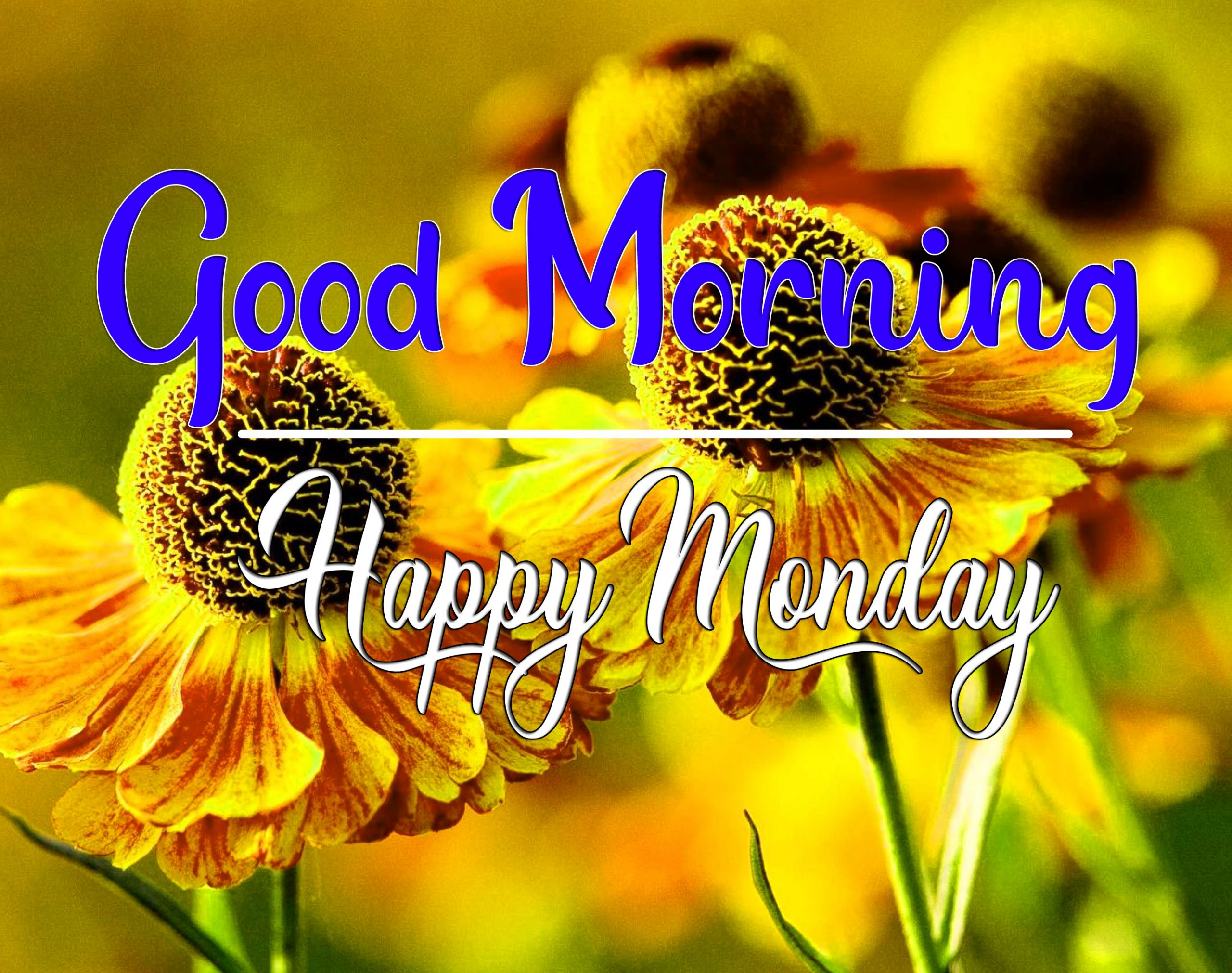 Monday Good Morning Pics HD Download 1