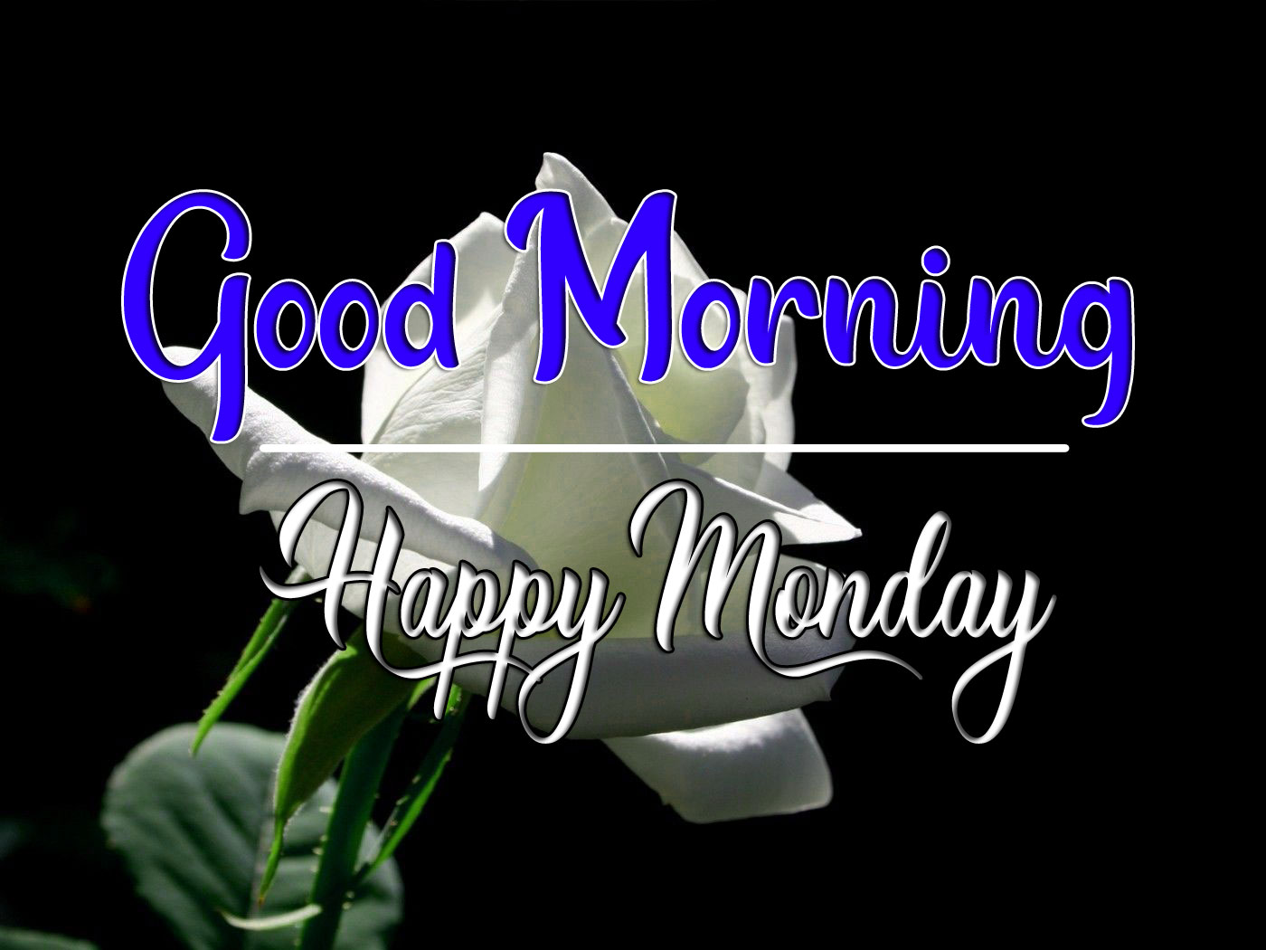 Monday Good Morning Wallpaper With Red Flower