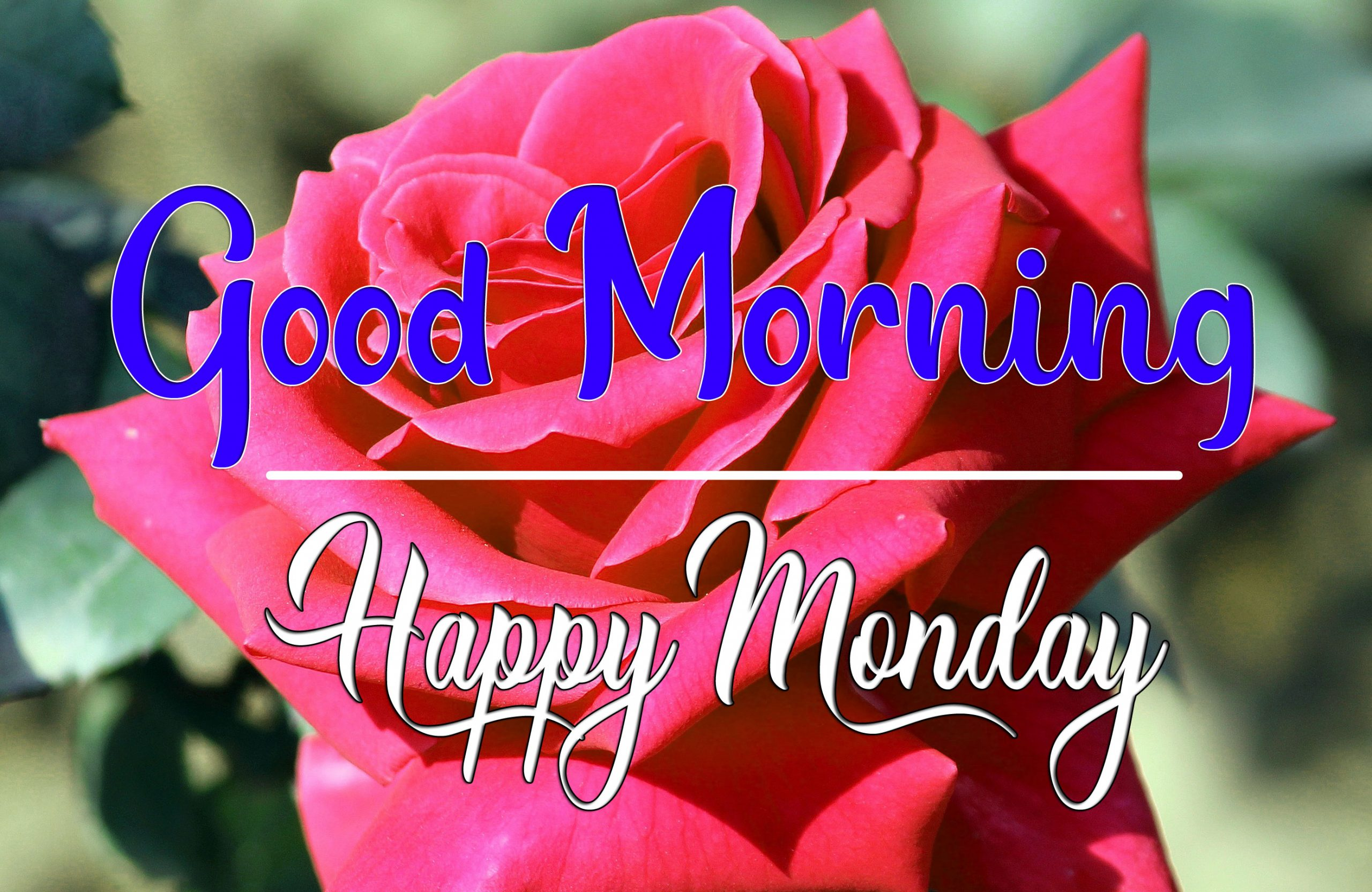 Monday Good Morning Wallpaper for Status 2