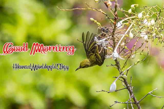 Nature Bird Good Morning Dear Images