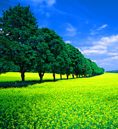 Nature HD Latest DP Images 1
