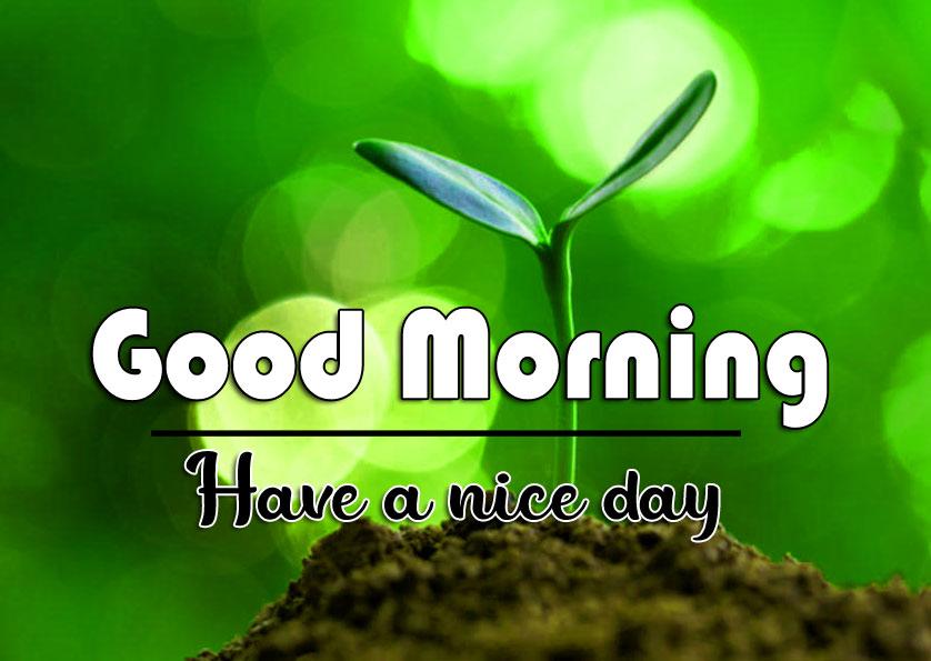 Nature good morning Whatsapp dp