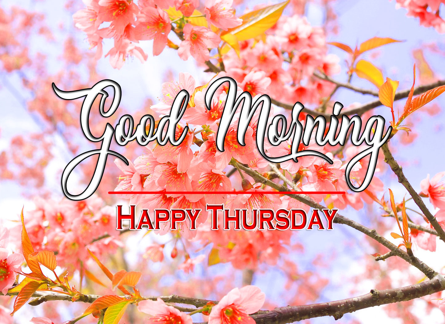 Nature thursday morning Images
