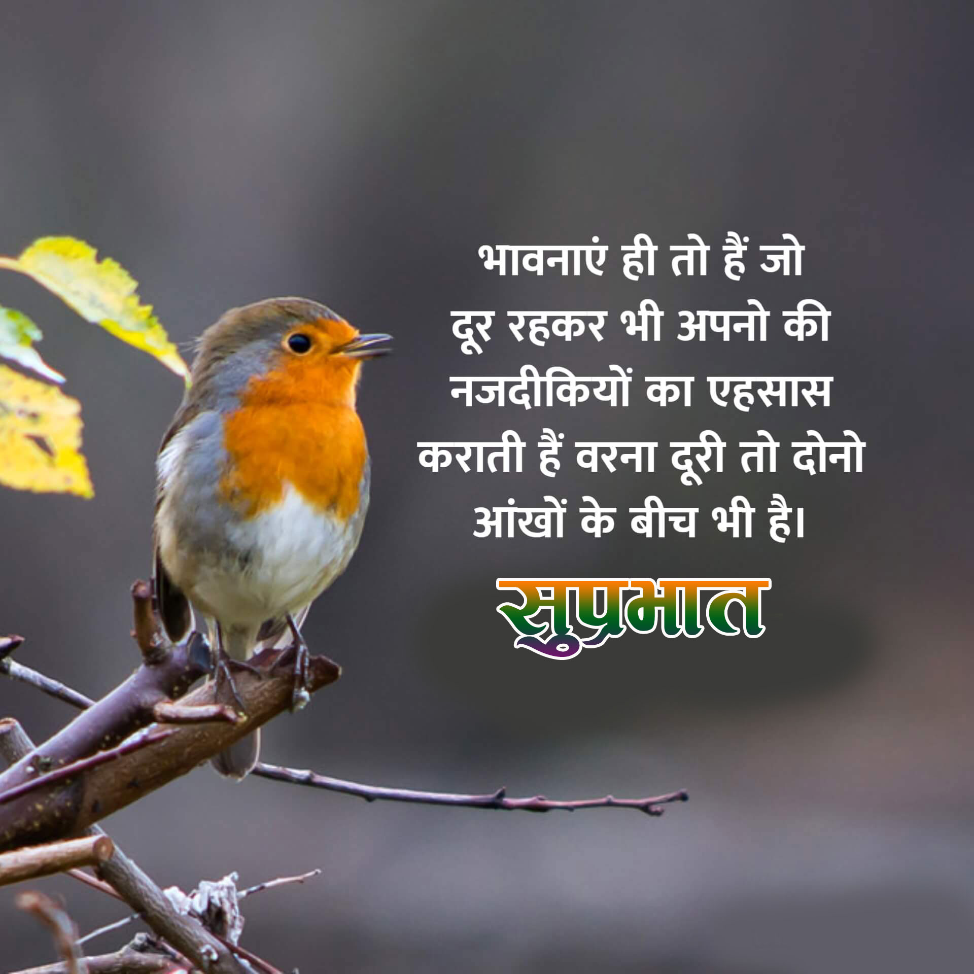 New Beautiful Suprabhat Images for facebook