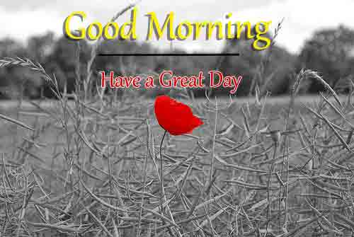 New Best Good Morning Pics Pictures