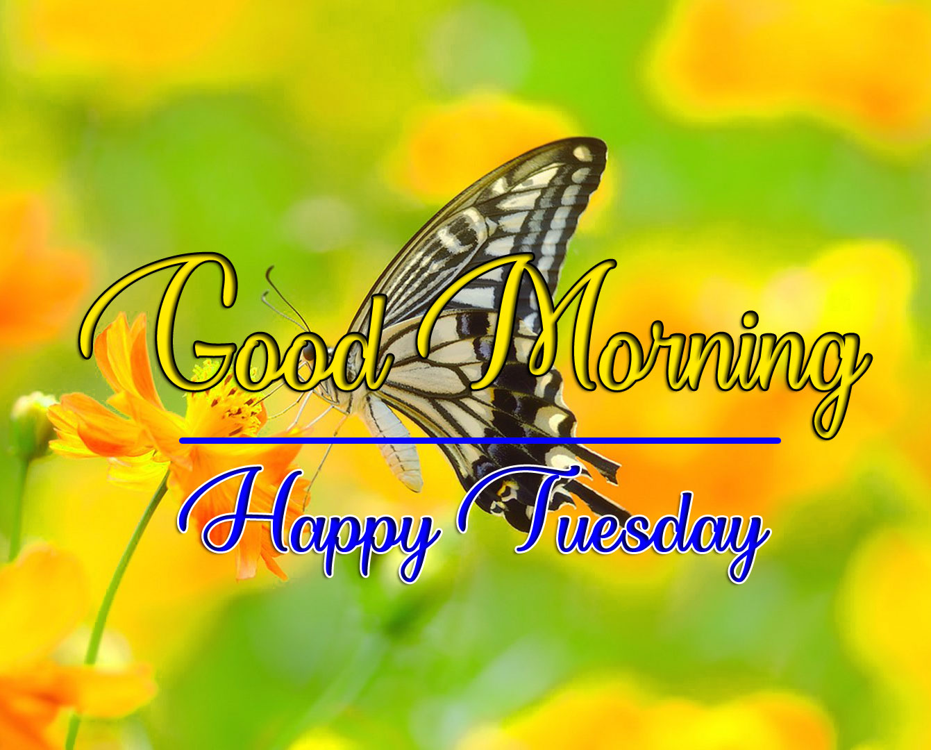 New HD Butterfly Tuesday Good morning Images
