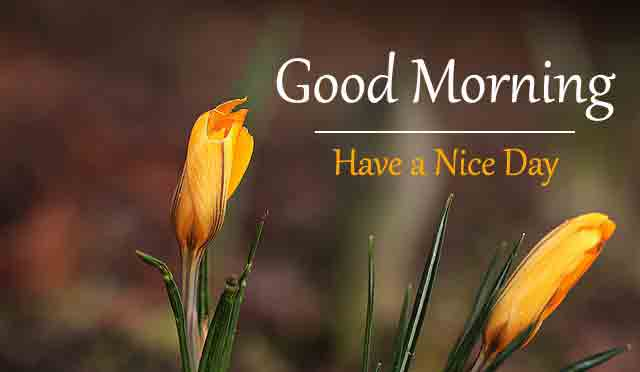 New HD Love Good Morning Images