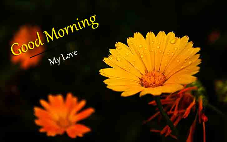 New HD Top Beautiful Love Good Morning Wallpaper 2021