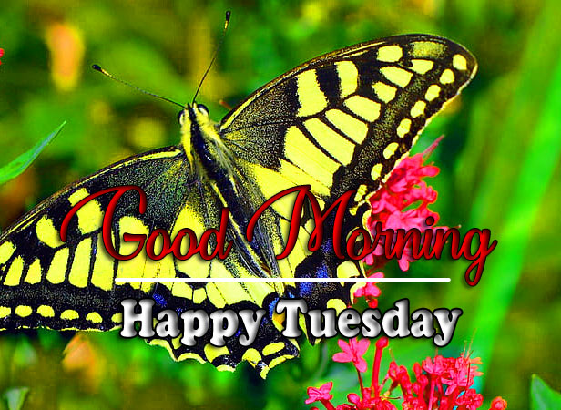 New HD Tuesday Good morning Images Download