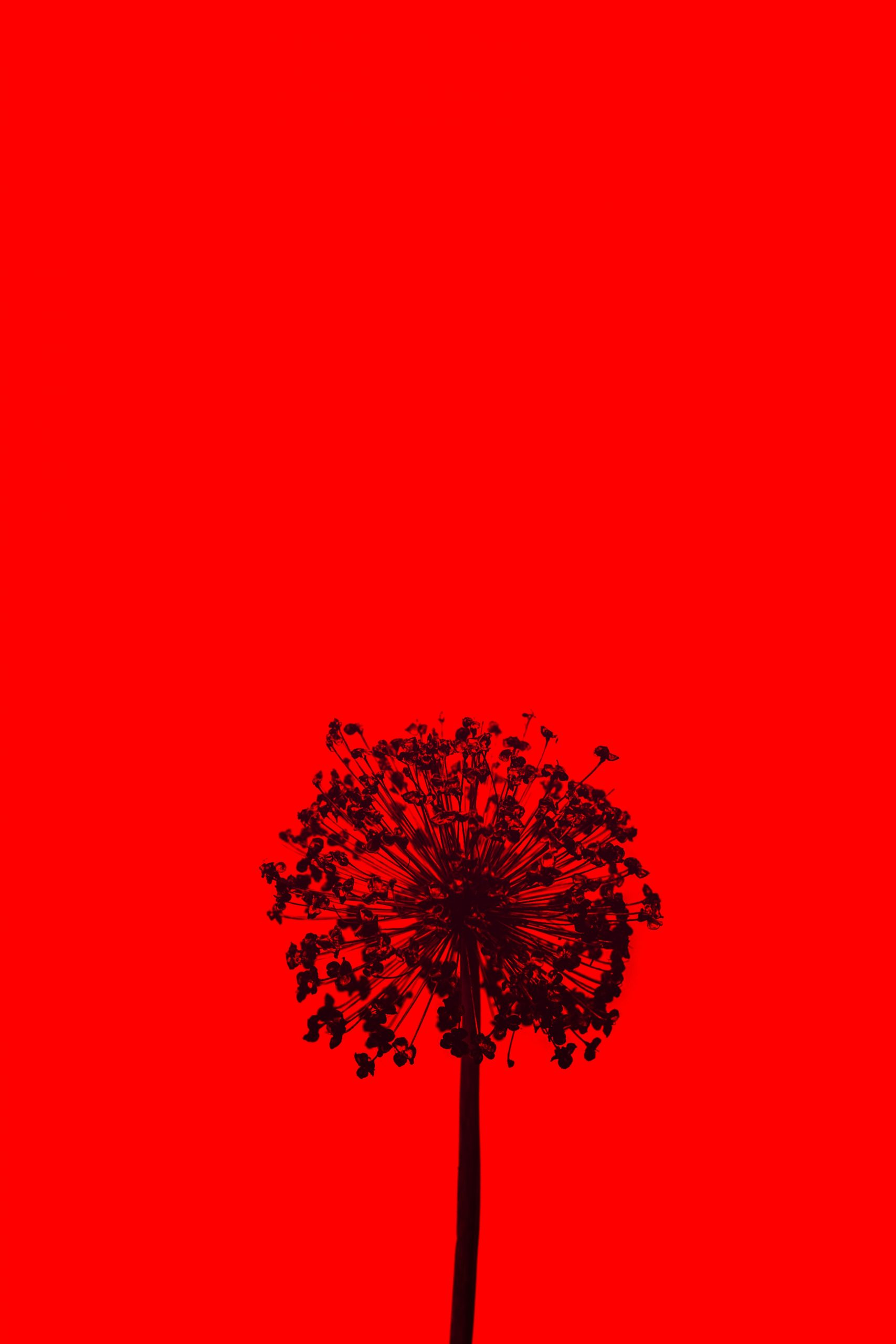 New Red Wallpaper