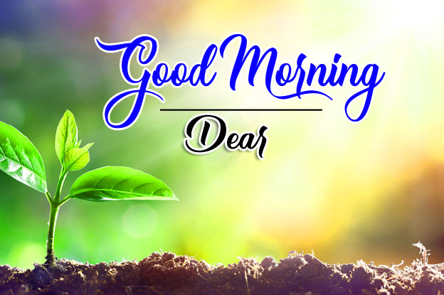 Plant Nature good morning Whatsapp dp Images