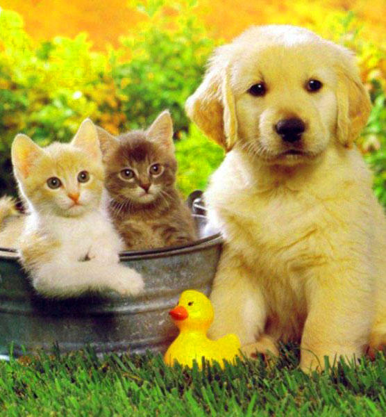 Puppy Latest DP Images 1