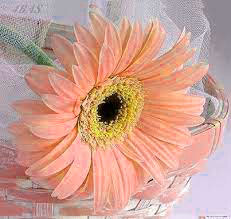 Quality Flower DP Images