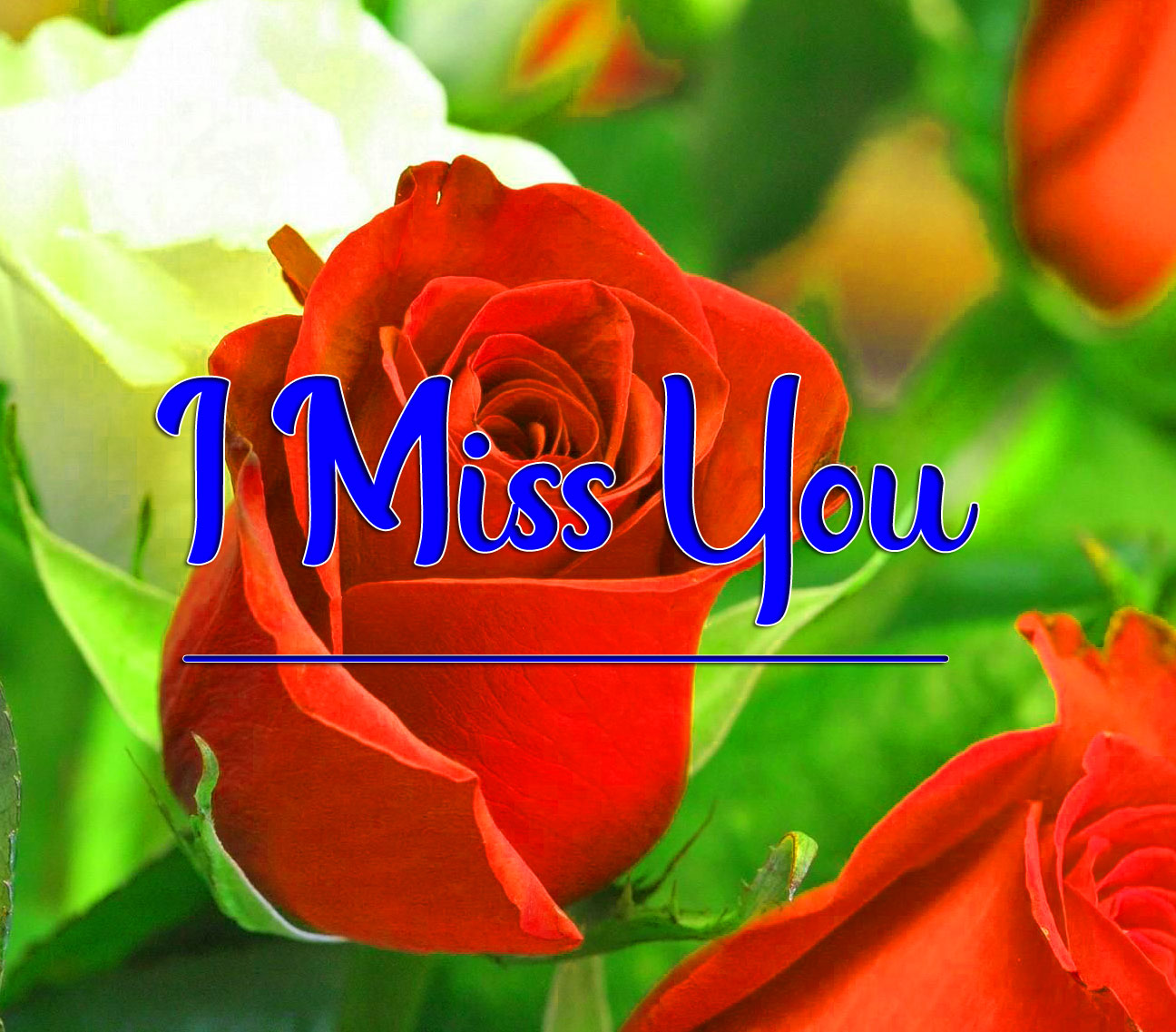 Red Rose HD I miss you Images