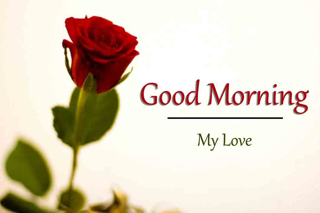 Red Rose Love Good Morning Images Pics HD