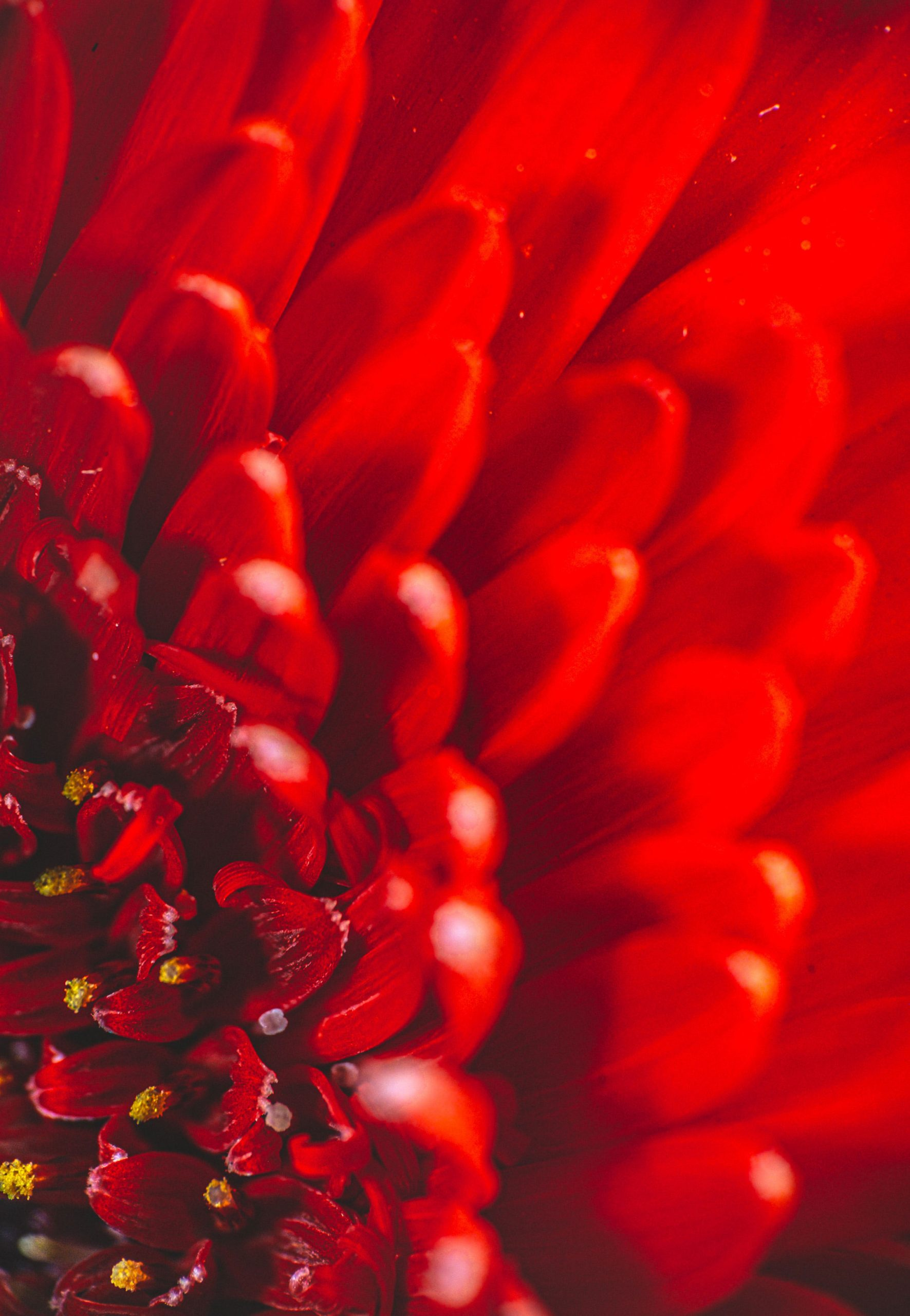 Red Wallpaper images hd download