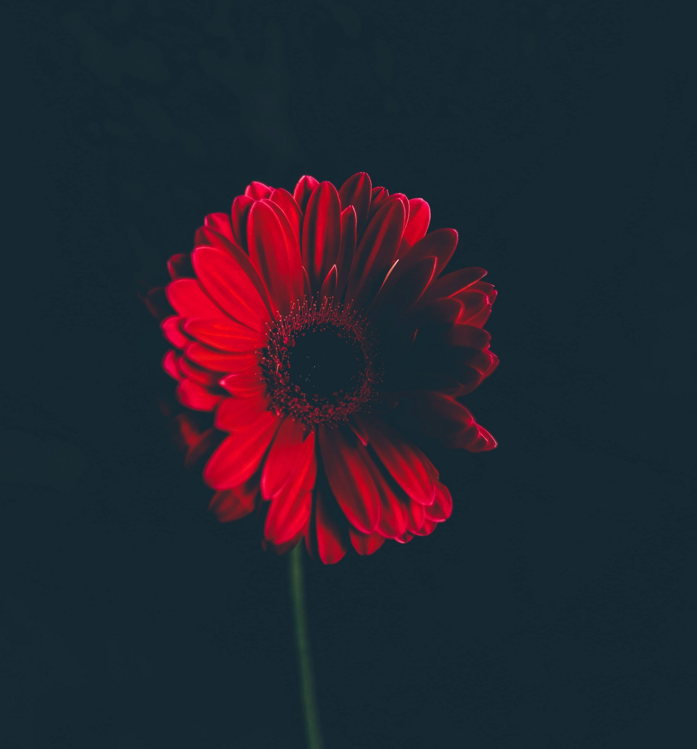 Red Wallpaper photo pics download