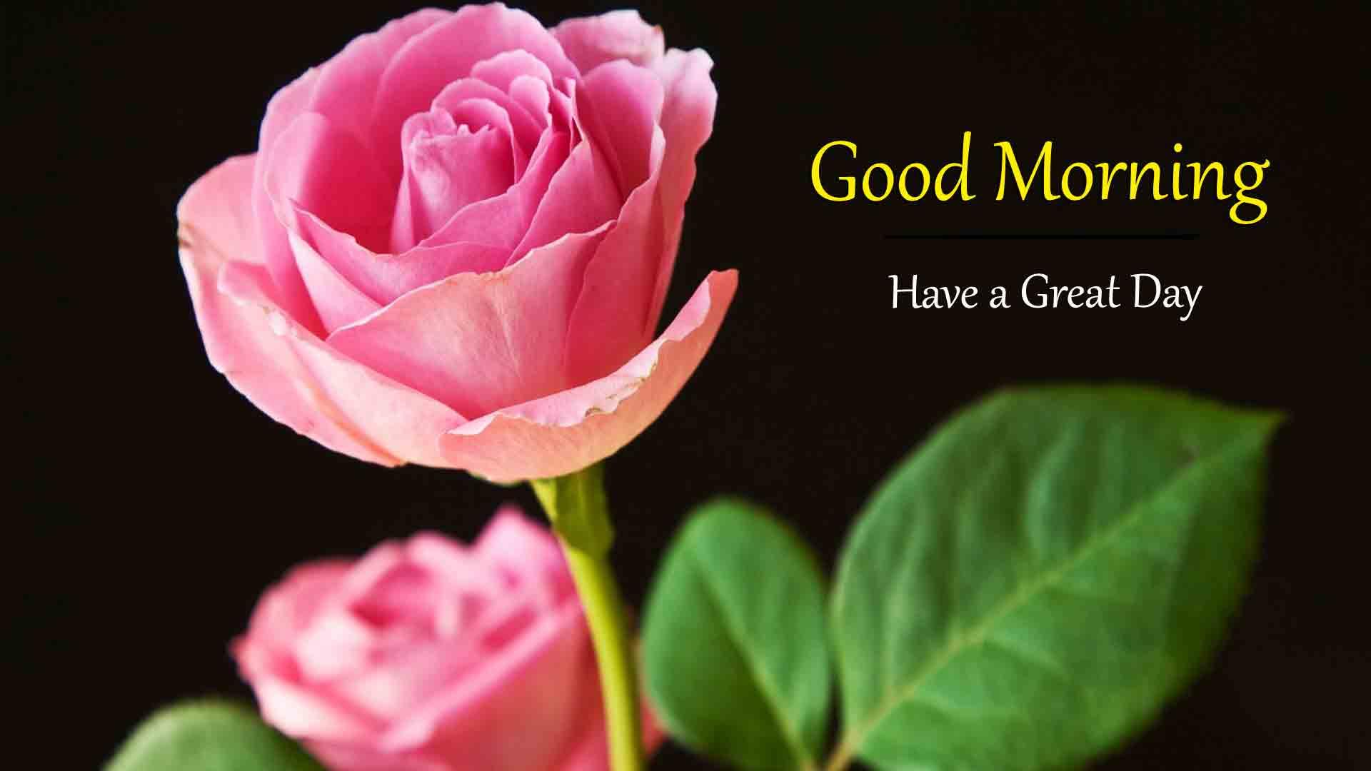 Rose Good Morning Dear Wallpaper