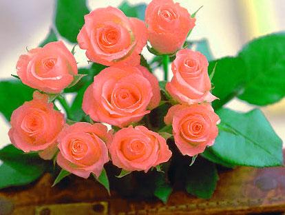 Rose HD 1080p Flower DP Pics HD