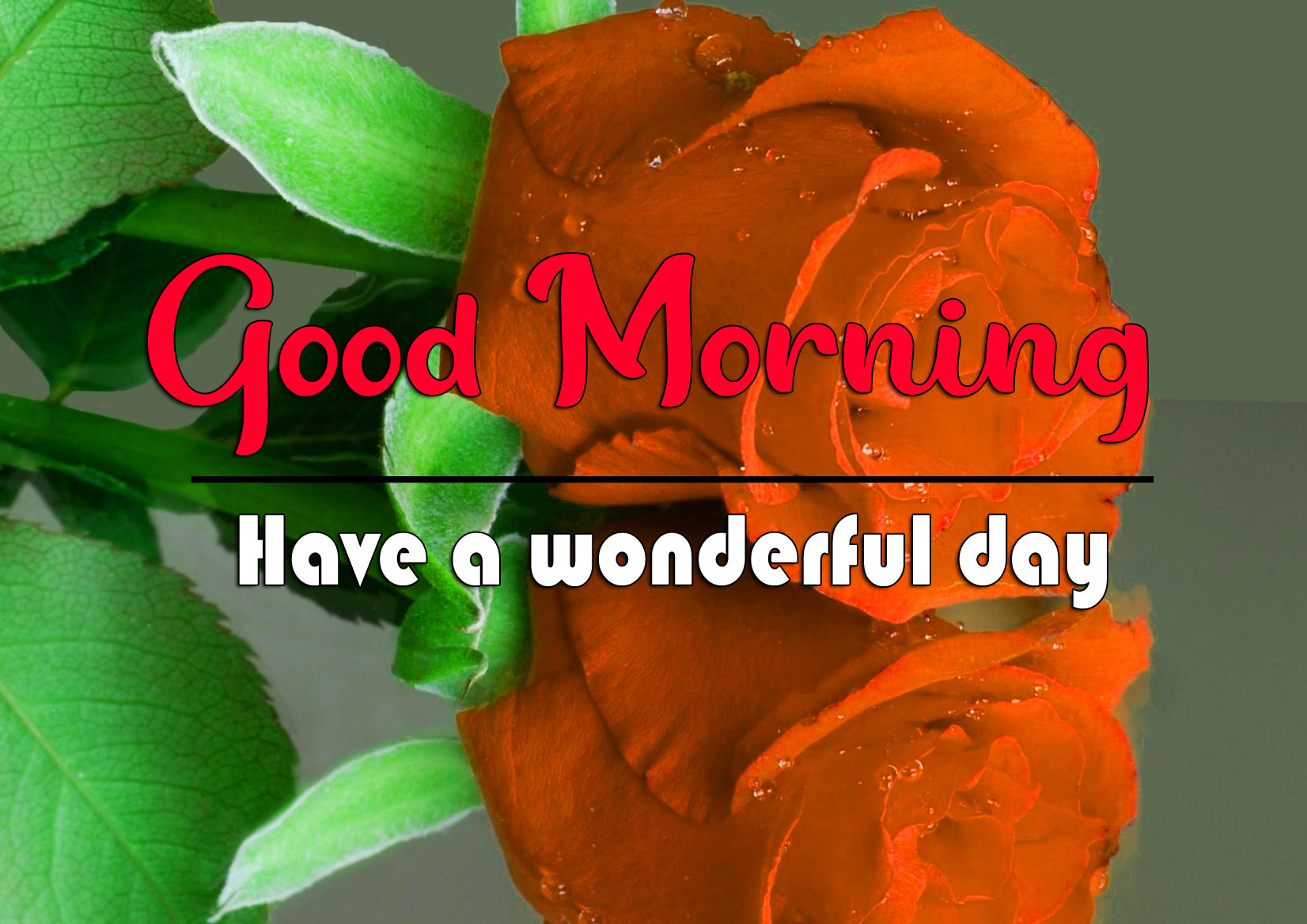 Rose HD Good Morning Wishes Images