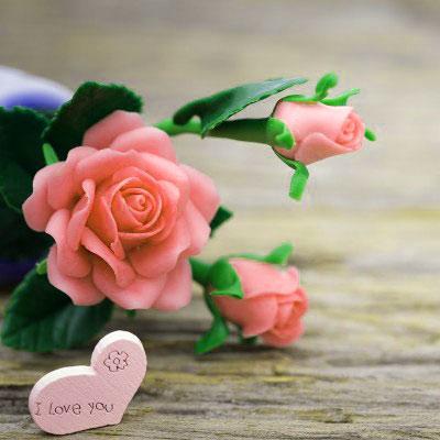 Rose sweet whatapp dp Images