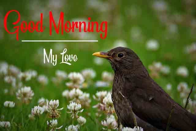 Sleted Good Morning Dear Images