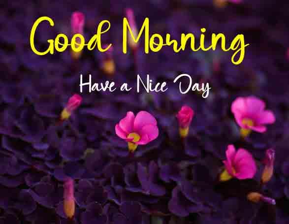 Super HD Beautiful Love Good Morning Images