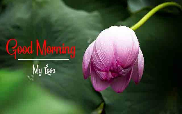 Top Free HD Love Good Morning Pics Wallpaper 2021