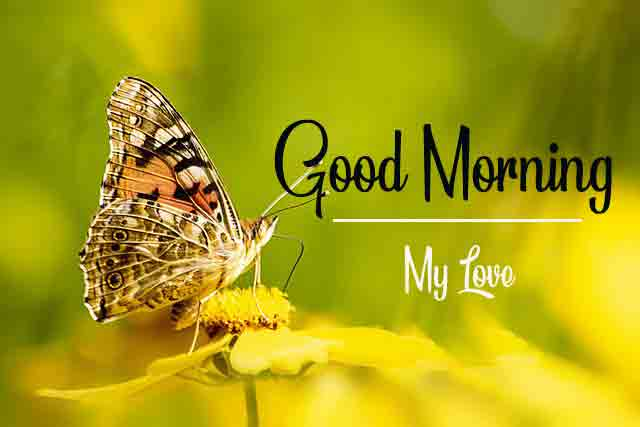 Top Good Morning Dear Images With Butterfly