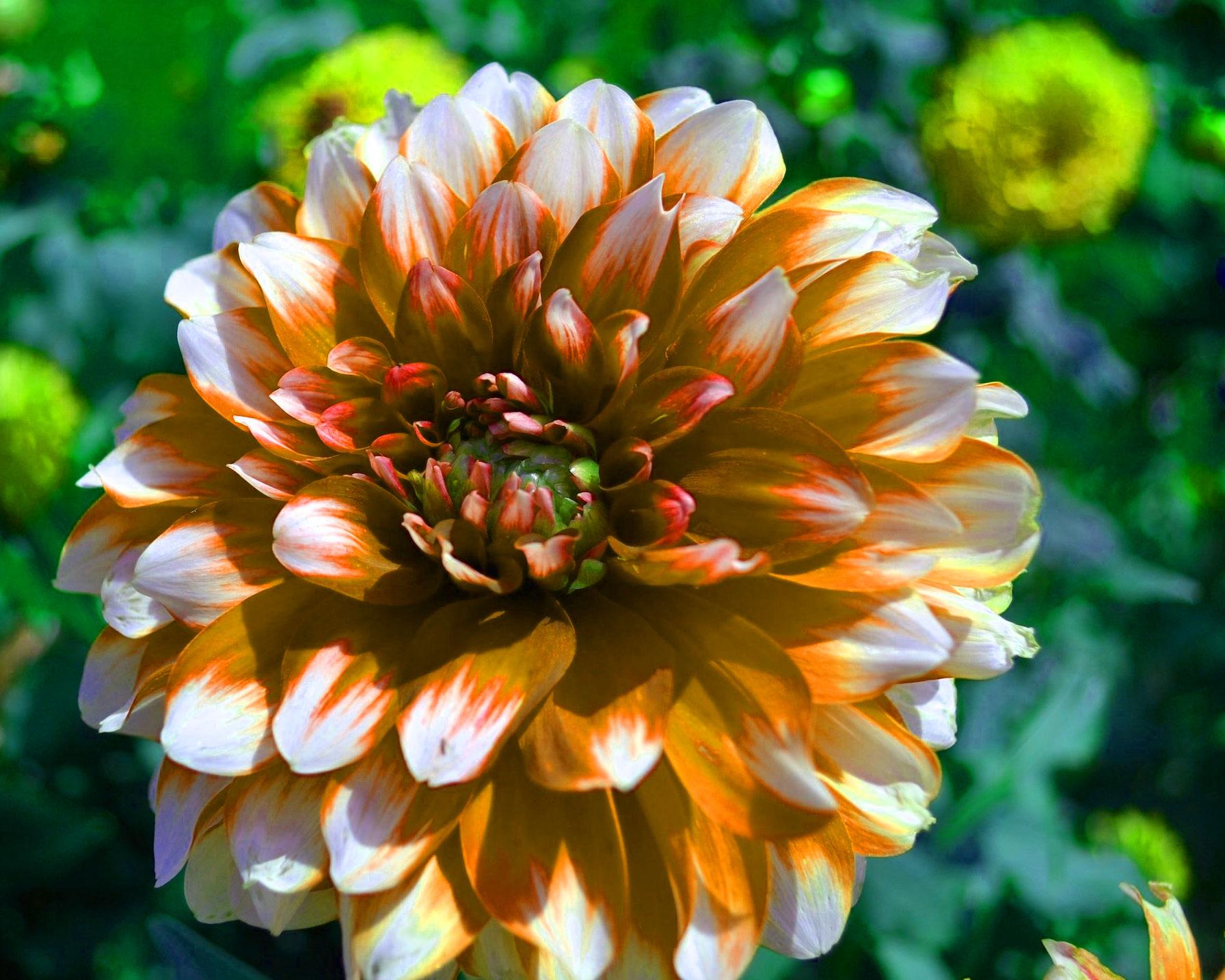 Top HD Flower DP Images