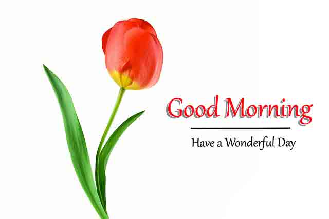 Top HD Good Morning All Images