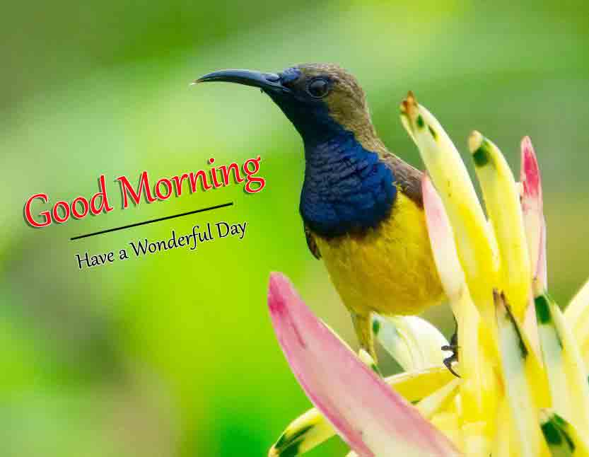 Top HD Good Morning Dear Images 3