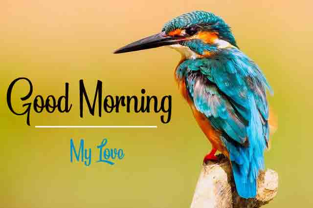 Top HD New Love Good Morning Images