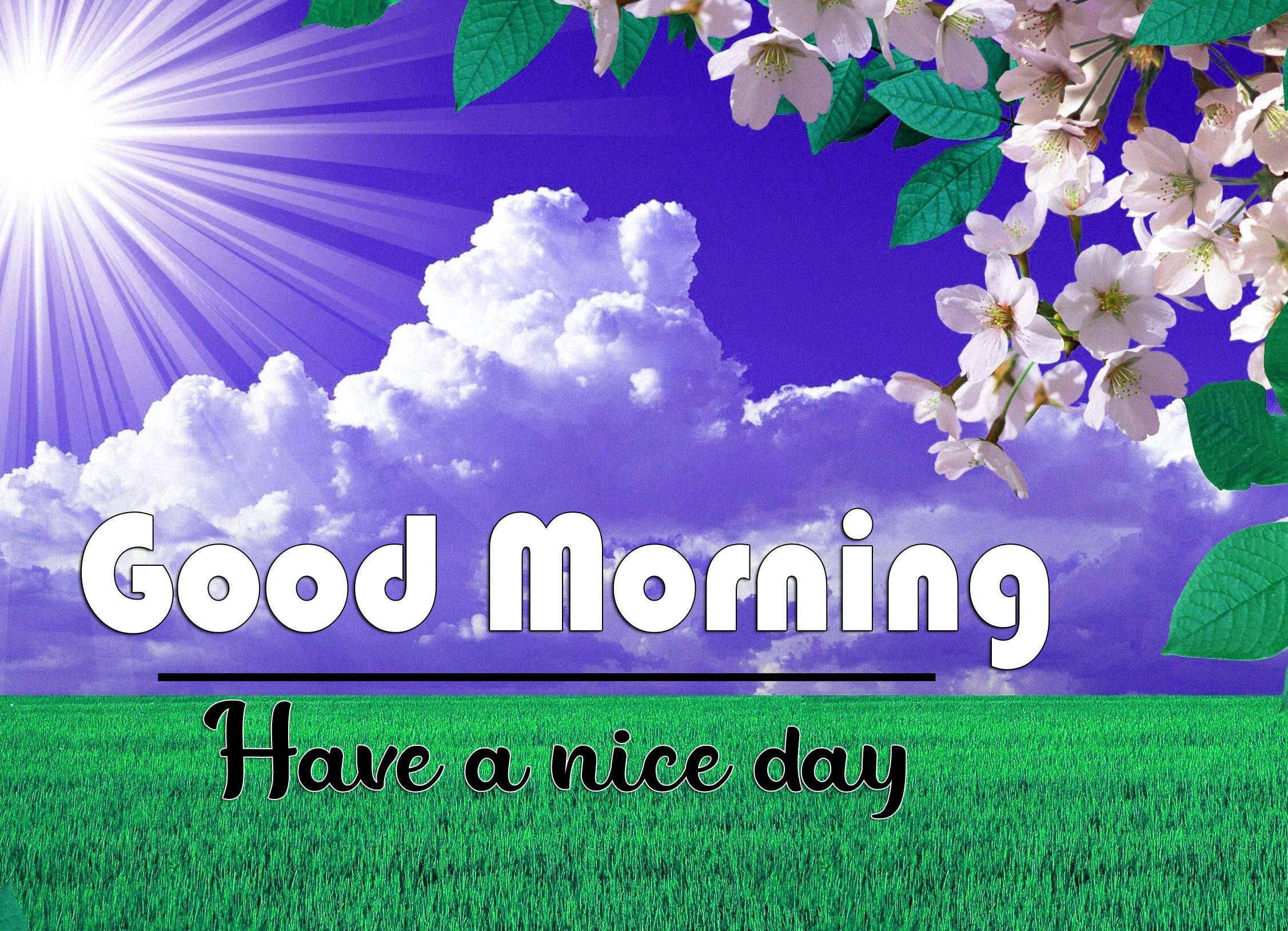 Top HD good morning Whatsapp dp Photo