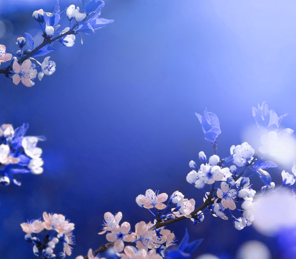 Top Quality 1080p Flower DP Images
