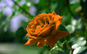 Top Quality Flower DP Images for girlfriend