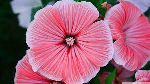 Top Quality Flower DP Images