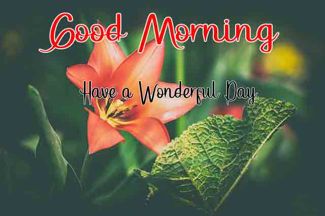Top Quality Good Morning All Images 2