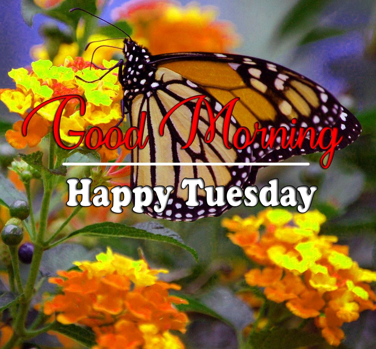 Tuesday Good morning Pics 2