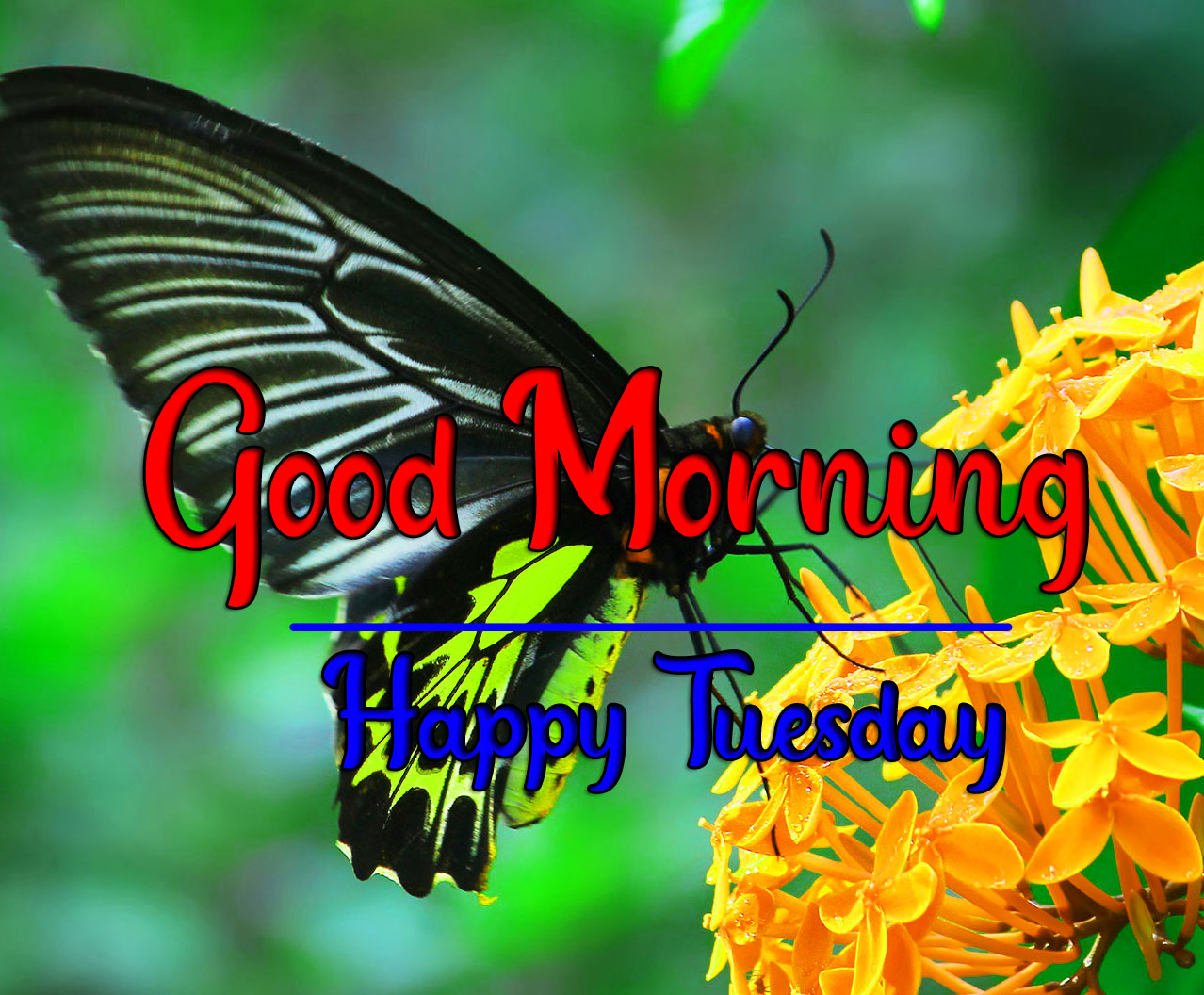 Tuesday Good morning Pics HD With Butterfly