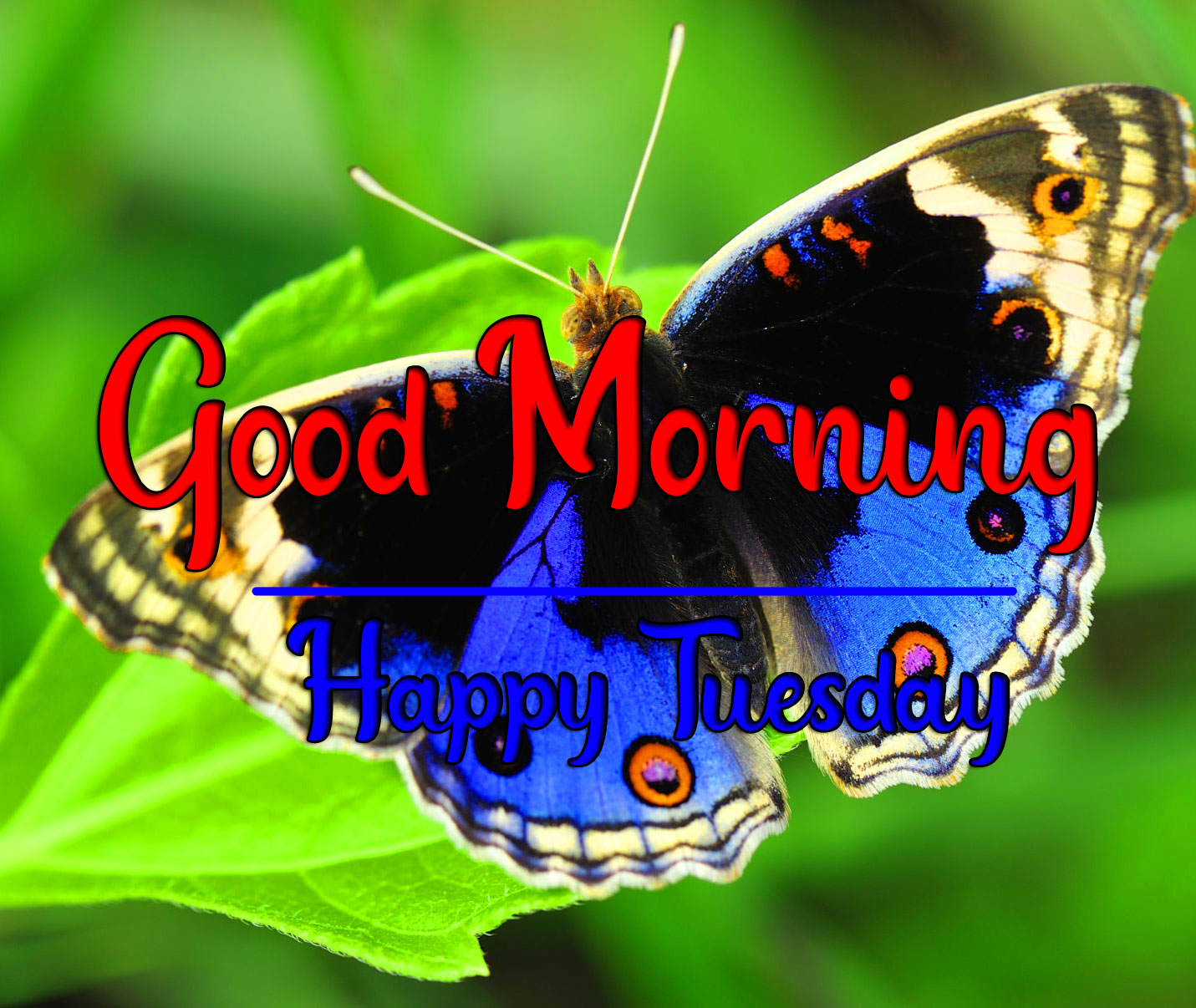Tuesday Good morning Pictures With Butterfly