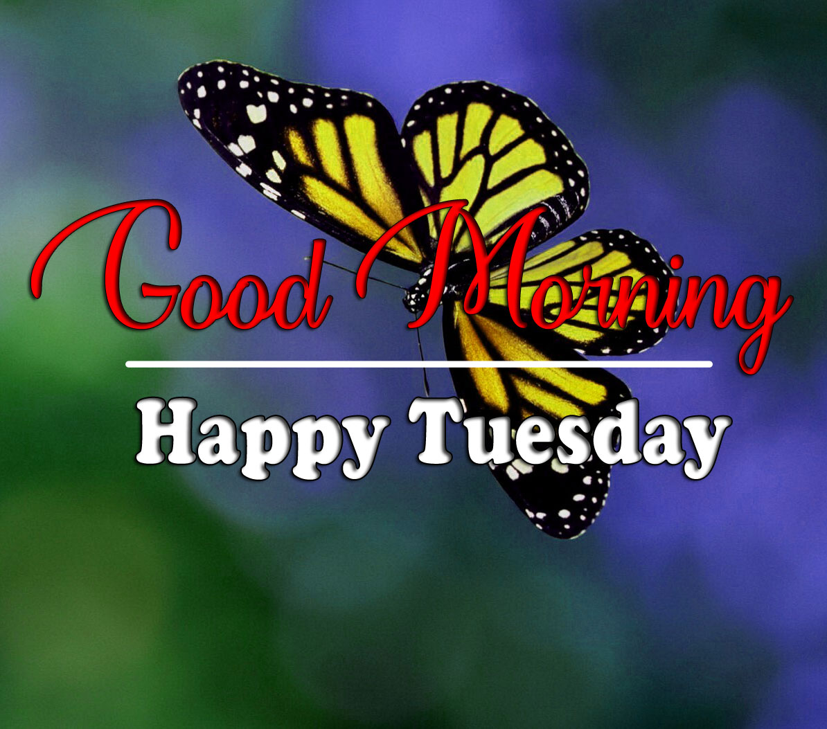 Tuesday Good morning Wallpaper Latest 2021