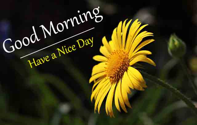 With Flower Love Good Morning Images