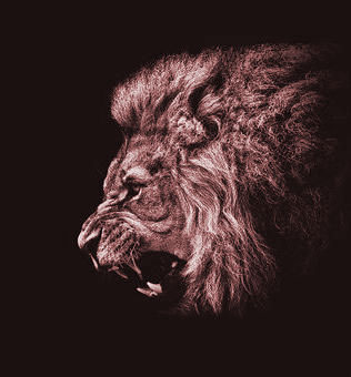 best pic for dp Wallpaper With Lion