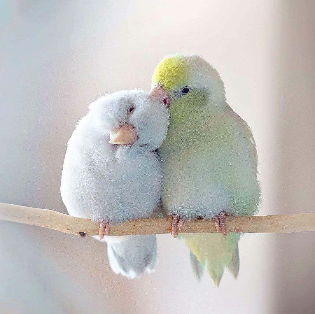 bird Peaceful Whatsapp Dp Images