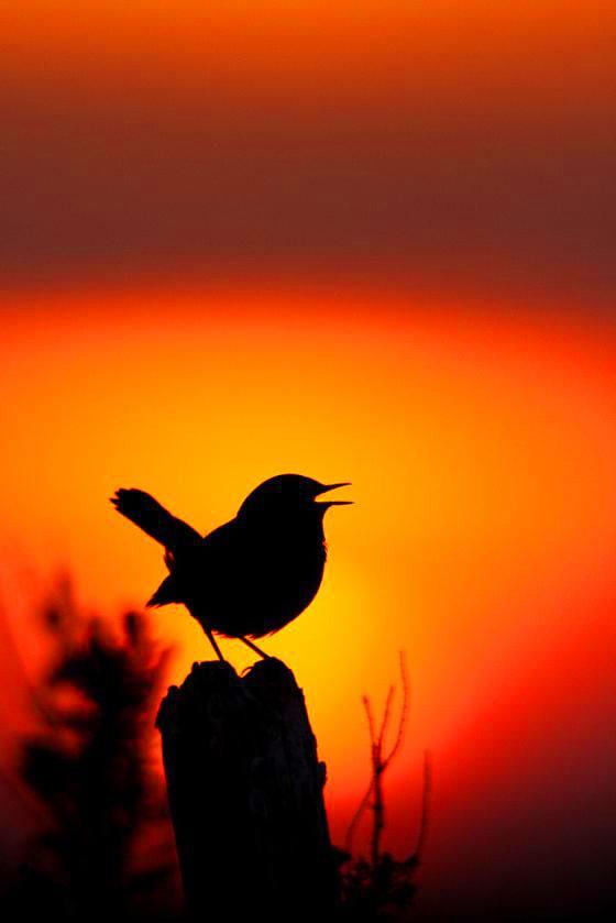 bird Whatsapp Profile Images 1