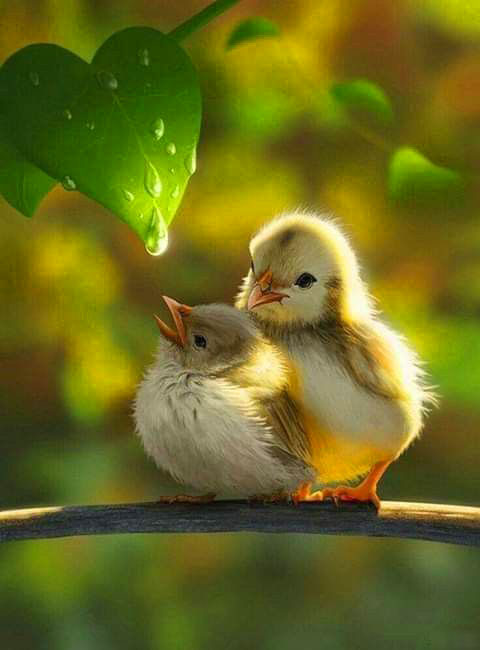 bird lovers Latest Superb Whatsapp Dp Images