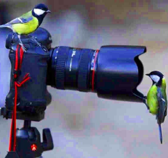 birdbest pic for dp