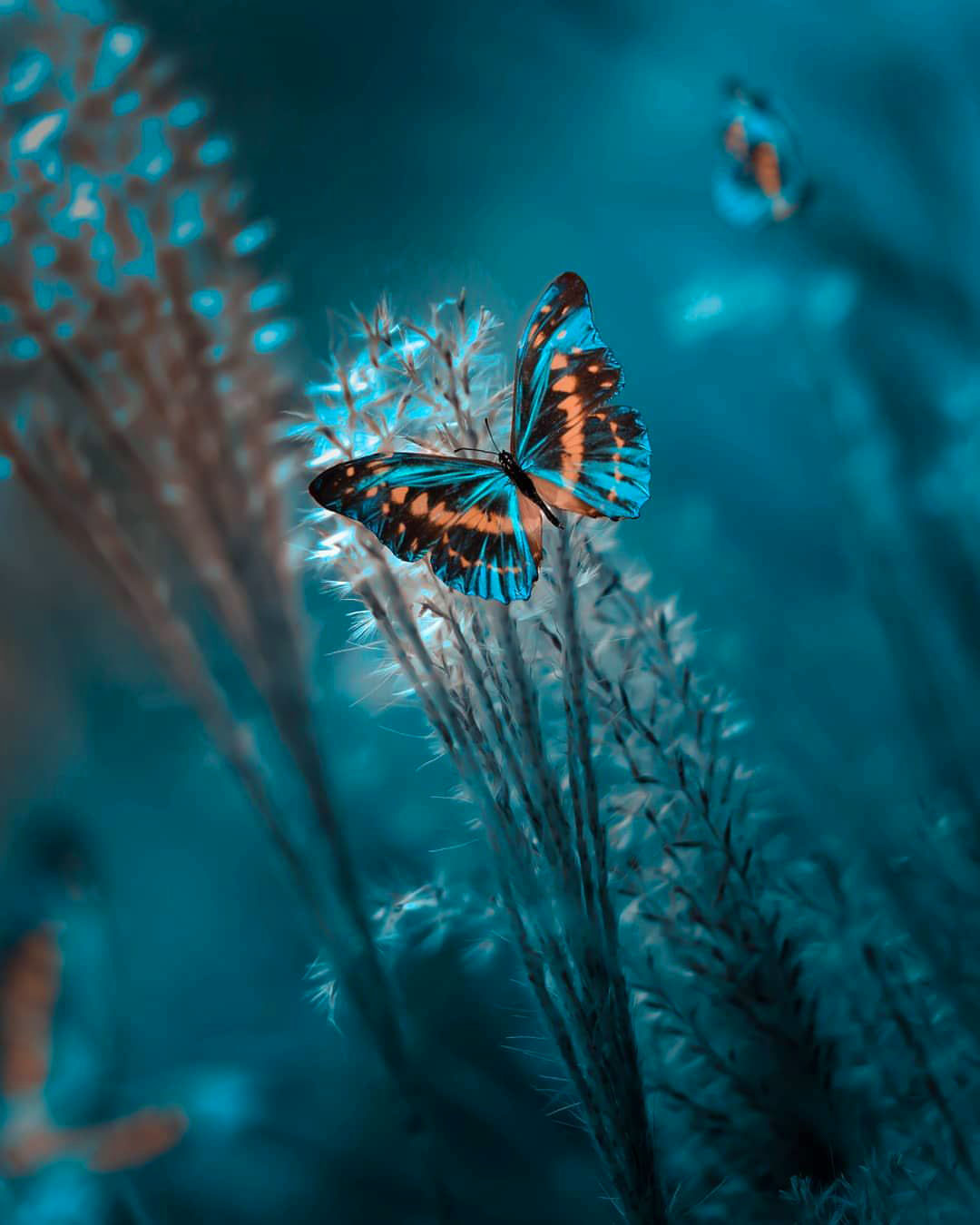 butterfly 4k Uniqe Whatsapp Dp Images hd download